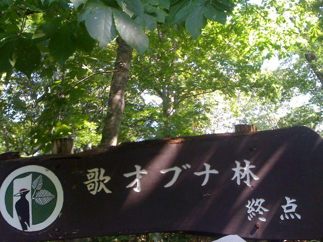 北限のブナ林がある黒松内へ初めて行ってきました☆