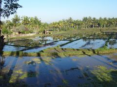15年7月~初めてのインドネシア●2 にぎやかな通りから田んぼまで、歩いて回るバリ・ウブドゥ