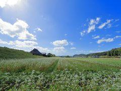純白の花が咲き誇る 神戸市北区淡河町(OGO)のソバ畑へ!
