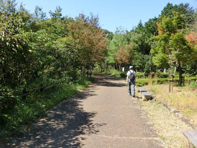 岐阜市の人は幸せだ。<br />ハイキングにぴったりのよい山が、岐阜にはある。<br />もし私が岐阜市民なら、月に1〜2回は百々ヶ峰に登るだろう。