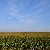 トウモロコシ畑の絶景が見られる東追分駅(北海道)
