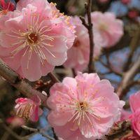 歩き回った!年度またぎ(*´▽`*) 春の奈良旅行(3日目:吉野 編)
