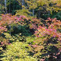 2015 谷川② 温泉からの~紅葉探し♪