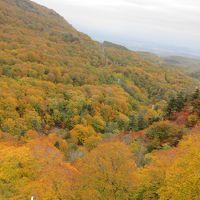 みちのくに秋を見つけに行きました ~風の中、紅葉探して八幡平