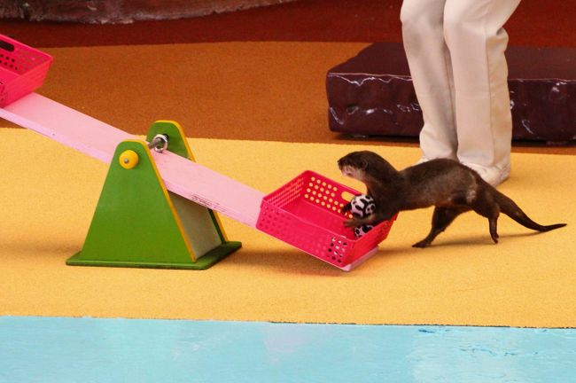シルバーウィーク前に優雅に3泊3日の南紀白浜アドベンチャーワールド三昧2015(7)3回ずつ観た動物アトラクション:可愛くて笑えるアニマルアクションと迫力でかっこいいマリンライブ