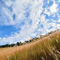 秋を感じに、ススキの大草原を散策