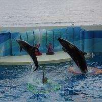 10月4日はイワシの日~抽選に当たって、新江ノ島水族館でイベントに参加する<主人公はイルカ&クラゲ>