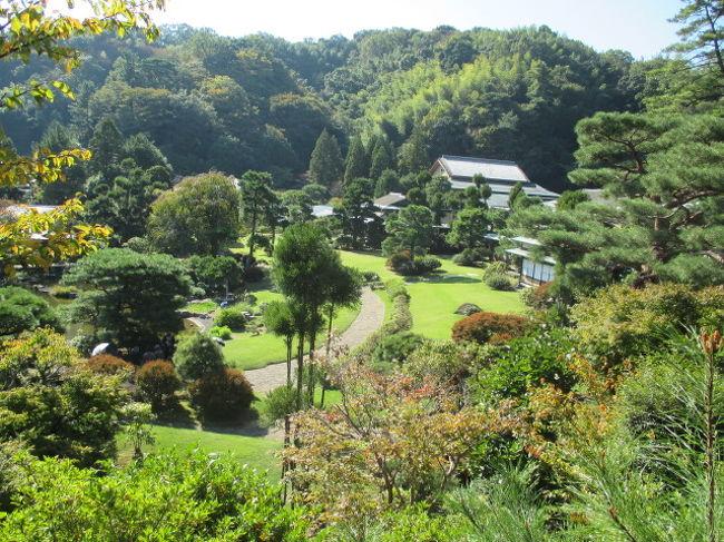 三万坪の敷地に三千坪の庭を持つ三養荘に宿泊。<br />もう一ヶ月遅かったら素晴らしい紅葉が見頃だったでしょうねえ。