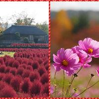 秋色を探しに・・・ ☆みちのく杜の湖畔公園☆