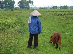 ベトナム、世界遺産チャンアンのある、ニンビンの奥さんの村を散歩する。