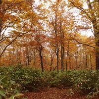 紅葉の群馬の山歩き♪紅葉も真っ盛りの 皇海山と武尊山登山