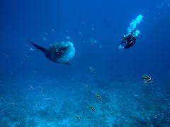 バリ島での夏休み マンボウダイビング 後編 Summer vacation in BALI ~mola mola diving 2~