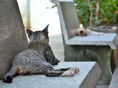 タイ ネコの楽園 クレット島をチャリで疾走する オッサンネコの一人旅