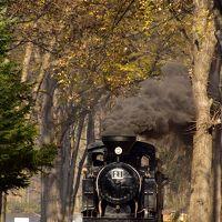 秋の北海道、道東地方を巡る旅 〜紅葉の中を走る北海道遺産森林鉄道「雨宮21号」を見に、丸瀬布いこいの森に訪れてみた〜