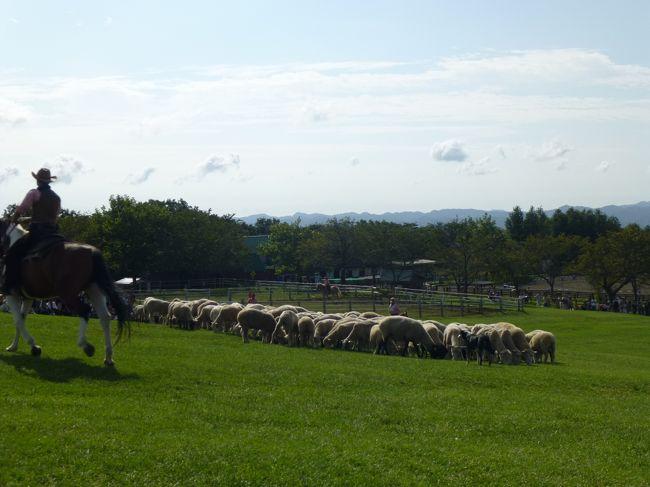 途中見つけた案内に、<br />「マザー牧場 シルバーウィークひつじの大放牧」(朝8:45〜)<br /><br />150頭の羊の群れ!<br />いいねいね〜、行ってみよう!<br />