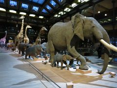 国立自然史博物館訪問記