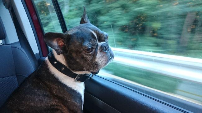 愛犬と共に家族で夏の東北旅行へ行ってきました。<br />青森県で2泊、福島県で2泊の計4泊5日。<br />どちらも犬と一緒に泊まれるお宿で、今回は福島県にあるレジーナの森での旅行記です。