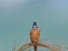 野鳥撮影記録(2015年10月30日)
