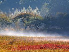 10月、霧の小田代ケ原 ~上旬の草紅葉と下旬のカラマツの黄葉~