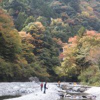 秋の奥多摩の釣り