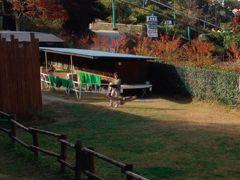 飛行機のスポイラと一緒 「群馬サファリパーク」潜入記 5 富岡・佐久 2015晩秋 5