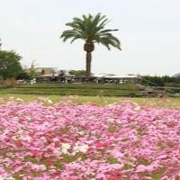 旅するイルカ♪ 和泉リサイクル環境公園へ