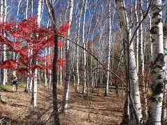 紅葉のはずだった横谷渓谷と白駒池(2日目)