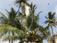 スリランカ周遊⑥ 南西海岸は見どころいっぱい