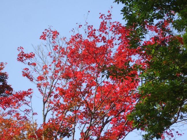 紅葉の野尻湖