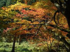 高蔵寺で紅葉狩り
