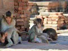 タイ ロッブリーでクメール遺跡と猿の跋扈する街並みを歩く オッサンネコの一人旅