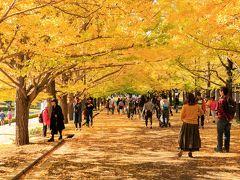 国営公園散策日記②-2 黄葉を楽しみに~国営昭和記念公園~