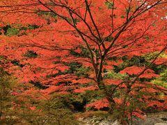 旅するイルカ♪ 紅葉狩り 和歌山県 玉川峡へ