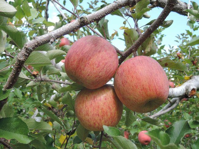 十年以上前から、秋になると毎年、沼田へリンゴを買いに行きます。<br /> それは、私の好きなジョナゴールドの美味しい期間が、もぎ取ってから3-4日間程度と極めて短く、美味しいリンゴを食べたいなら産地へ買い出しに行かねばならないためです。<br /> また、富岡製糸場は、私の旅行記でも何度か取り上げた奥村正二さんの「火縄銃から黒船まで」の姉妹編の「小判・生糸・和鉄」に出てくる場所です。そのため、世界遺産に登録される以前から、一度見てみてみたいと思っていたのですが、機会に恵まれませんでした。しかし、この年の夏、五箇山で煙硝倉を見て、早く行かねばと思うようになりました。<br /> 更に、90歳になる私の母を、たまには温泉にでも連れて行こうかという話もありました。<br /> それやこれやを全部合わせて、今回のドライブ一泊旅行を企画しました。<br /> 結果は、私達は満足、母は楽しんだようですが少々お疲れと行ったところです。<br /><br />1日目 11月5日<br /> 自宅→昼食:富岡のはや味で「おっきりこみうどん」<br />  →富岡製糸場→泊:草津温泉の大東館<br />2日目 11月6日<br /> →草津:湯畑散策→沼田:金子りんご園<br />  →昼食:中善寺金谷ホテルのコーヒーハウス ユニコーン<br />  →中禅寺湖展望台→自宅