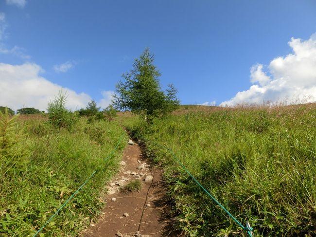 我が家の夏の恒例になっているのが女神湖畔に建つ「ホテルアンビエント蓼科」滞在と車山高原ハイキングである。今回は娘夫婦、妻、そして私の4名で出かけた。<br /><br />毎年のことなので、詳しくは以下の旅行記参照<br />http://www.e-funahashi.jp/japan/cest/index.htm<br /><br />◎私のホームページに旅行記多数あり。<br />『第二の人生を豊かに』<br />http://www.e-funahashi.jp/<br />(新刊『夢の豪華客船クルーズの旅<br />ー大衆レジャーとなった世界の船旅ー』案内あり)