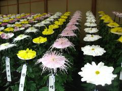 '15 新宿御苑の菊花壇展に行ってみた