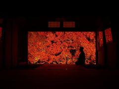ライトアップが始まった但馬安國禅寺に行ってきました!