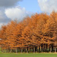 ギリギリの秋、みーつけた!札幌