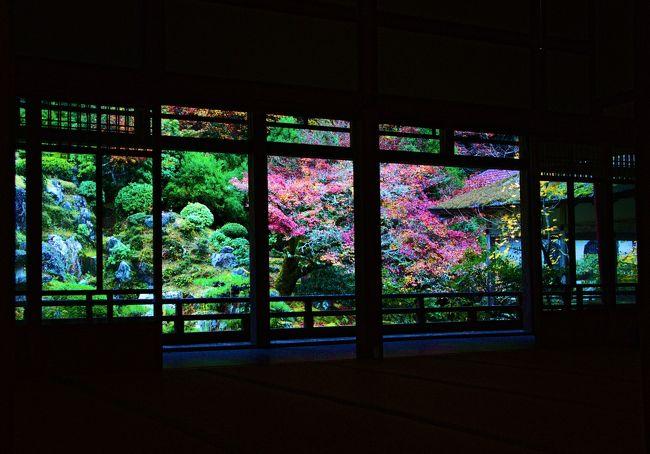 紅葉便りが気になる季節が到来しましたので、京都市内では比較的早く紅葉を迎える常照皇寺(じょうしょうこうじ)を訪ねてみました。交通が不便な所にあるため聞き慣れない名のお寺ですが、京阪京都交通「美山ネイチャー号」で美山かやぶきの里とセットになった企画を知り参加してみました。京阪樟葉駅前か高速長岡京(阪急西天王山駅)から乗車できる便利な周遊バスです。巡った順番通り、まず「常照皇寺編」をお届けいたします。<br />北山杉で名高い周山街道(国道162号線)を抜けて鯖街道へ出ると、川端康成著『古都』の舞台になった鄙びた山国に辿り着きます。歴代天皇の帰依を得た皇室所縁の常照皇寺は、太閤検地まで皇室直轄の荘園だったこの長閑な山里に佇みます。正式名を大雄名山万寿(だいおうめいざんまんじゅ)常照皇寺と言い、本尊に釈迦如来立像を祀り、南北朝時代に北朝の初代天皇となった光厳(こうごん)院が1362年に草庵を結んだことに始まる臨済宗天龍寺派の禅宗寺院です。<br />光厳院は、南北朝の動乱期に歴史の波に翻弄され、南朝 後村上天皇行宮にて出家し、その後隠棲して禅宗に帰依しました。帰京後、丹波山国庄を訪れ、同地にあった天台宗梶井門跡系の成就寺を改めて開創したのが始まりです。光厳院は、開創2年後に示寂し、当地に葬られました。その後第2世となった清渓通徹が光厳院の菩提を弔うために開山を光厳院とし、禅刹に改め万寿常照皇禅寺と名付けました。戦国時代には一時衰退の憂き目に遭いましたが、その後復興され、江戸時代には徳川秀忠から寺領として井戸村の50石を与えられています。<br />寺門前を流れる大堰川(桂川)に掛かる山陵橋(さんりょうはし)からの保全地域の眺めは、四季折々の変化が素晴らしく、なだらかな山容と相まって山号の大雄山と呼ぶに相応しい景観を呈しています。近年は、京北の「紅葉の隠れ名所」としても注目されています。<br />常照皇寺のマップです。<br />http://www.pref.kyoto.jp/shizen-kankyo/hozen10.html<br />http://town.zaq.ne.jp/p/s3aahuwe8hgagssgag2z-4265b3a4.jpg