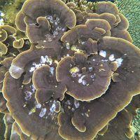 2015たらま島一周マラソン大会 1日目は宮古島で珊瑚見て~、黄昏れて~、飲んで~、