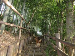 2015年11月1日:武蔵野の森探訪 武蔵野公園~野川公園~大沢の里(出山横穴墓群)~武蔵野の森公園