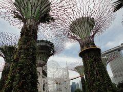 JGCに入るために 第3回② OKA-SIN修行 シンガポール0泊3日弾丸 ~ガーデンズバイザベイへ行こう~