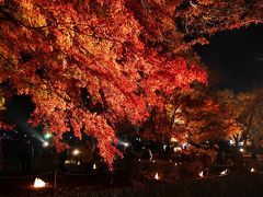 11月3連休、昇仙峡と河口湖もみじ回廊ライトアップをバスツアーで訪れました
