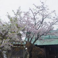 桜と猫の牛窓散策