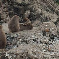 大阪 海遊館とみさき公園に遊びに行こう Vol.2