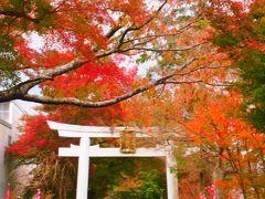 まだまだ旅行気分の、週末の滋賀散策~♪ ⑤日頃の通勤ルートの紅葉を楽しんだ1日