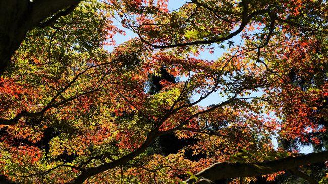北鎌倉から鎌倉へ(2015年11月)