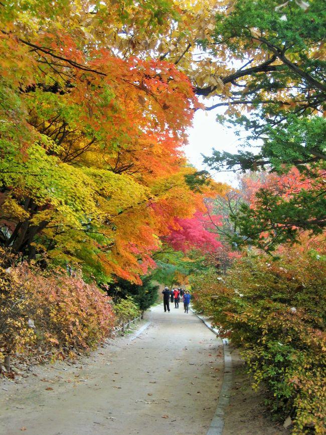 前回のソウル旅行からあっと言う間に3年がたち、2012年とはずいぶん変化したソウルに行ってきました。<br />日本人はかなり減り、大陸からの旅行客が圧倒的に多かったです。<br /><br />今回は紅葉まっさかりの時期で、なおかつ寒くなる前でしたので街歩きが快適に楽しめました(*^^*)<br /><br />エア:大韓航空<br />ホテル:スカイパーク明洞2