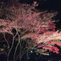 2015年初冬・・・・・①大田黒公園紅葉ライトアップ
