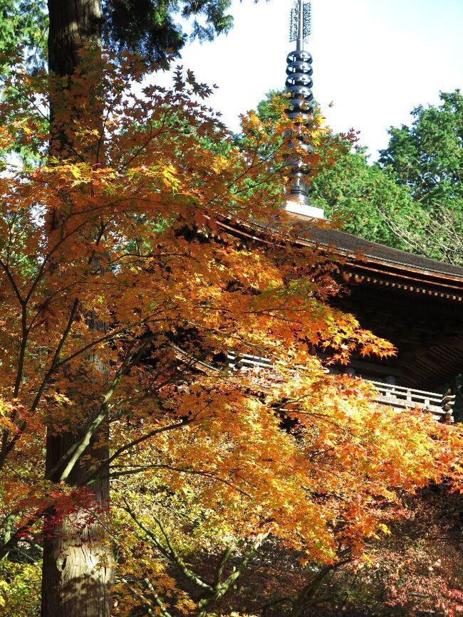 (写真は金剛輪寺、三重の塔)<br /><br /> 今回は関西の紅葉を求めて湖東三山と石山寺、そして昨年の高野山に続いて比叡山、そして宇治を廻ります。<br /><br /> 湖東地域はかつて東国や北陸からの大変重要な戦略的、経済的通路でありました。なにより京都に行くにはここを通らねばなりません。安土には信長が居城を構え、長浜には浅井が秀吉が、また、彦根には大老井伊家が、と数え上げれば切がないほど。 琵琶湖があることによって主たる陸路が湖東に限定されたわけです。<br /><br /> 湖東三山においては特に百済寺(ひゃくさいじ)が重要です。 山城としての性格を併せ持ち、一大文化拠点だったようです。 残念ながら信長の焼打ちにあい、燃え尽くされてしまいました。 さて肝心の紅葉はすでに10日ほど前にピークを過ぎて、落葉拾いになってしまったようです。<br /><br /> ・百済寺白寿を過ぎてなお燃ゆる   <br /><br /> ・滴るや血染めの紅葉赤い露  <br /><br /> ・薄紅葉そっと眺めて西明寺   <悠遊人><br /><br />